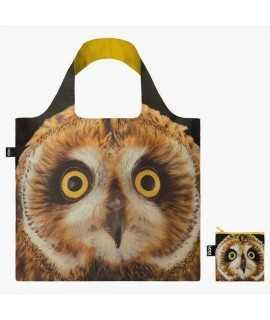Bolsa Short-eared Owl